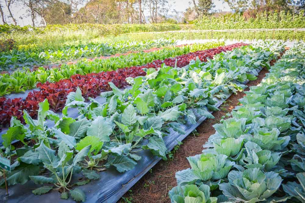 Gemüsegärtnerei – oder: Market Gardening auf deutsch