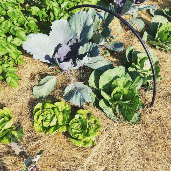 Den Boden mulchen – Methoden und Materialien