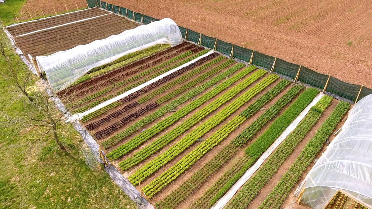Weierhöfer Gartengemüse – zu zweit von 1500m2 gut leben!