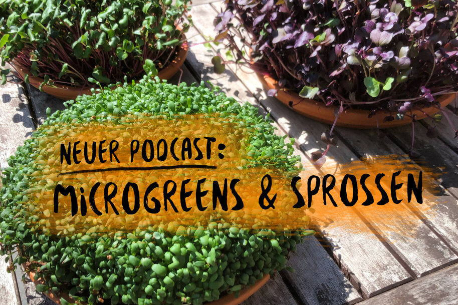 PODCAST 19: Microgreens und Sprossen